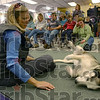 Center of attention: Karen Land talks about her sled dog, an Alaskan Husky, Borge. Borge has retired from racing, but travels with Land as she speaks of the Iditarod and dog sledding.