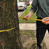 Tribune-Star/Joseph C. Garza<br /> For good measure: Besides a camera and a clip board, City Forester Bill Kincius also brings along a measuring tape reel to measure the various trees he inspects on a daily basis like this one on Second Avenue Thursday.