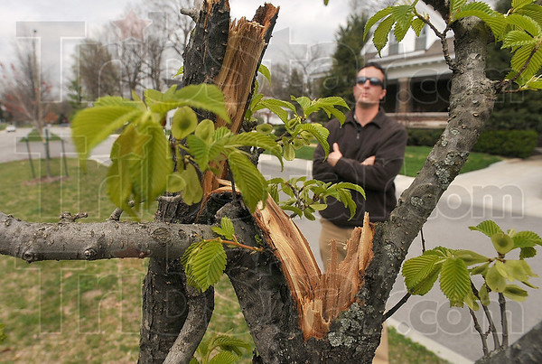 Tribune-Star/Joseph C. Garza<br /> Urban forest damage: City Forester Bill Kincius surveys damage done to trees April 15 on Adams Boulevard.