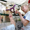 Alpaca pair: Three-year-old Jadyn Riggs and her sister Jessica (6) give some lovin' to an alpaca during Earth Days at St. Mary's Saturday afternoon.