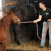 Tribune-Star/Joseph C. Garza<br /> Please. Pretty please?: St. Mary-of-the-Woods College student Lauren Nelson of Carmel tries to convince mustang, Code Red, to climb aboard a horse trailer during her EQ111 class final exam.