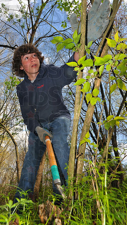 Inside work: Terre Haute North student Ricky Templeton uses loppers to cut down honeysuckle bushes at Dobb's Park Wednesday afternoon.