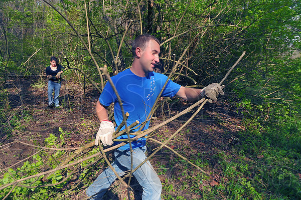 Cleaning up: Dakota Kendall hauls branches of honeysuckle from the woods at Dobb's Park. Behind him is Ericka Jaeger. They were two of several volunteers who spent part of their Earth Day helping clear the invasive plant.