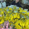 Busting out all over: Sherry Rader of the Visiting Nurses Association. Hospice of the Wabash Valley sorts bunches of Tulips Tuesday evening for delivery today.