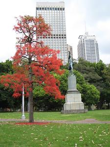 Beautiful orange tree in Hyde Park.