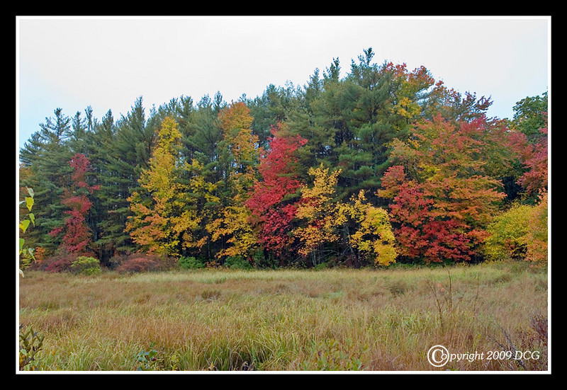 Autumn at Big River