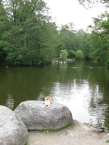 """P.J."" on rock at Pond in Botanical Gardens in Klaipeda, Lithuana - Lydia Osborne"