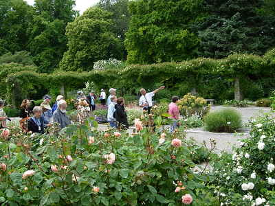 Visby garden -- David Chambliss