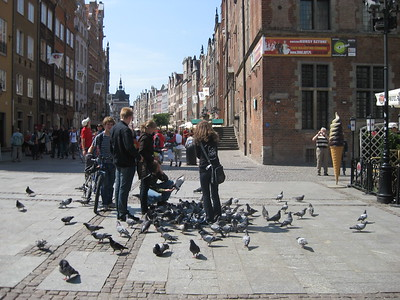 Copenhagen – Lunch hour with the pigeons - Lydia Osborne