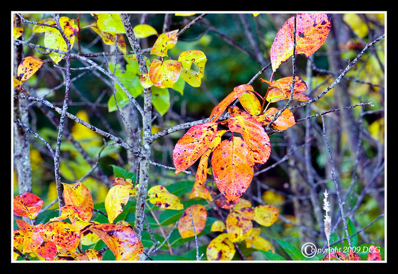 Fall Leaves at Bellamy River Wildlife Management Area