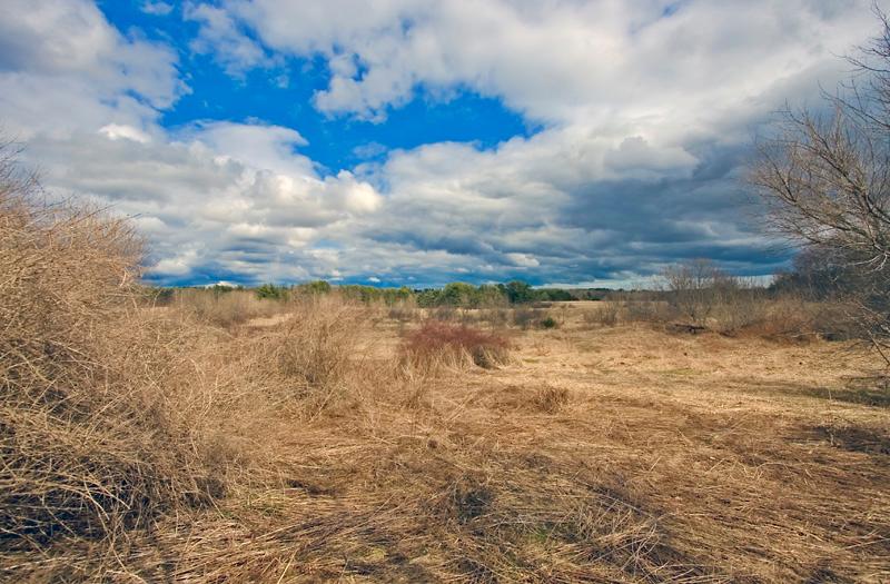 Bellamy River Wildlife Management Area