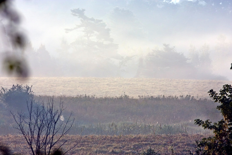 Foggy Morning at Bellamy River Wildlife Management Area