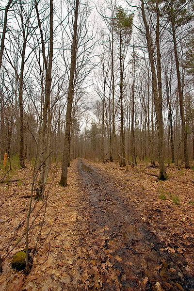 Muddy Trail at Bellamy River Wildlife Management Area