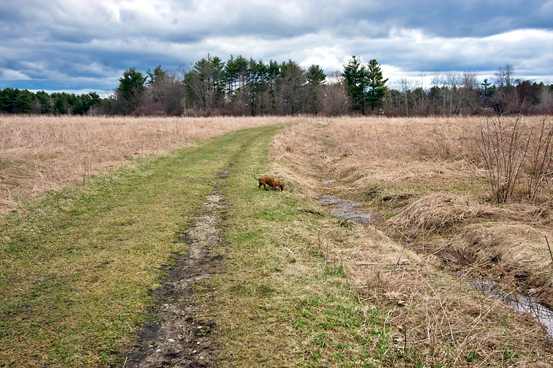 Trail at Bellamy River Wildlife Management Area