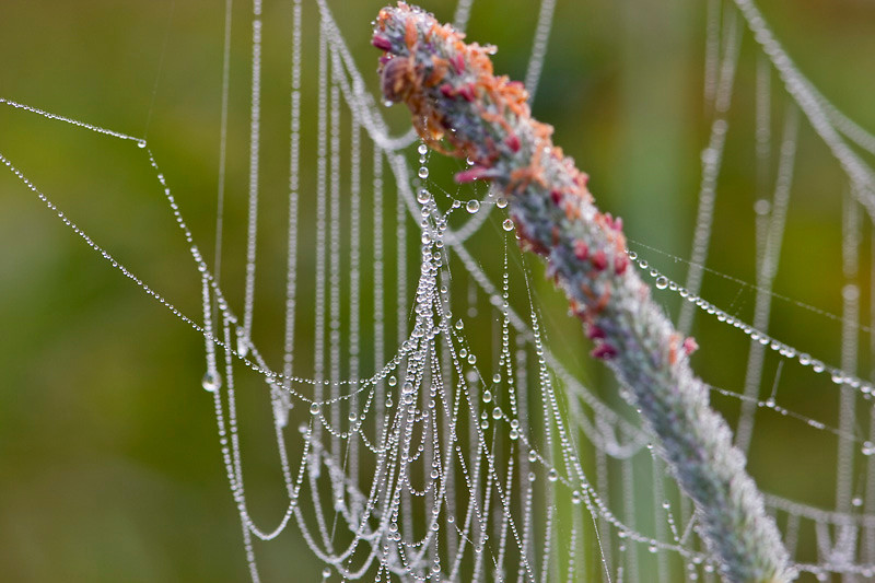 Dew Covered Spider Web at Bellamy River Wildlife Management Area