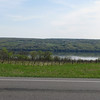 Lots of vineyards along Cayuga Lake