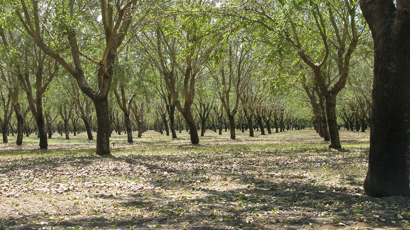 Apfelbaeume in California - Ich bin glaube ich fuer ungefaehr zwei Stunden nur an Apfelbaeumen vorbei gefahren...Es ist unglaublich wie viel Landwirtschaft Californien hat. Ich habe mich ein bischen in den Staat verliebt auf dieser Reise...