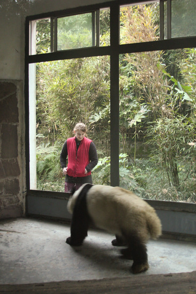 Tracy meets her first panda at the local panda breeding research center, one of Chengdu's main attractions.