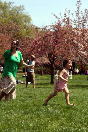 Cherry Blossom day 0409