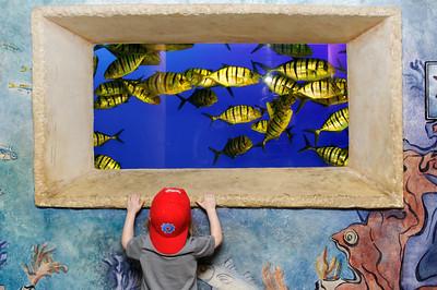 Anya looking at the fish at Seaworld, Orlando, Florida