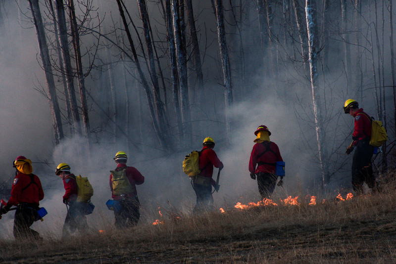Crews keep a line of fire from moving into the trees.