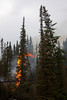 Fire climbs to the top of a spruce, torching the tree in a matter of seconds with a noise like an incoming jet.