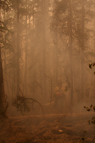 Faint sunlight struggles through the haze to reach the forest floor as fire burns all around us.