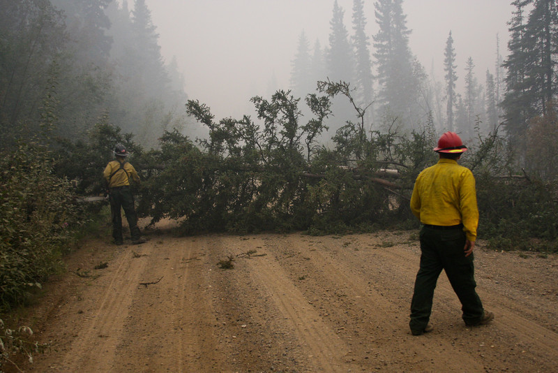 Fallen trees were a typical sight, and our job was primarily to keep the road cleared and open for all the traffic fighting the fire.  We cut with our head up, keeping an eye out for the next ones coming down.