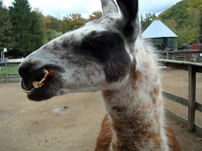 Tri-State Zoological Park - I haz a leaf