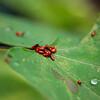Pile o' bugs