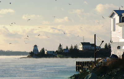 Day 303 - Sambro Harbour  For how cold it was, the gulls and others were on high alert.  Mostly for free handouts from the fisherman, but also for any predators such as Bald Eagles and Hawks.  The place came alive when a Bald Eagle was spotted, gulls came from everywhere flooding the sky making it very chaotic for the Eagle to single out anything.  It worked.    It was amazing to look out across the Atlantic and see nothing but mist coming off the water.  It looked like ribbons of mist as far as the eye could see.  Sambro is a very old fishing village that still has operating public and commercial wharfs, along with a few commercial fisheries.  There is also a Coast Guard station here as well.   Jan 28 2009