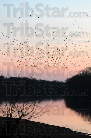 Tribune-Star/Joseph C. Garza<br /> Sunset crossing: As the sun drops below the horizon, a murder of crows drifts over the Wabash River, near Fairbanks Park, Monday.