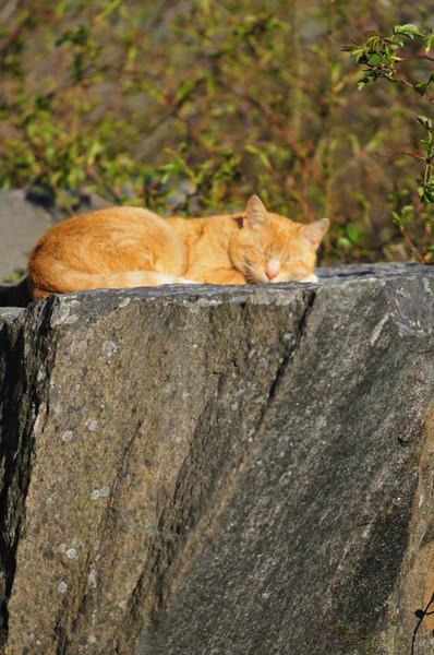 Lat katt på klippa.....