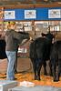 Cleaning Calves at Fryeburg Fair