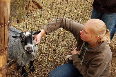 Scratch that goat