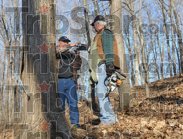 Maple tree tap: Bud Montgomery (L) and Keith Ruble work tapping maple trees in a wooded area near Prairie Creek Park Friday afternoon.