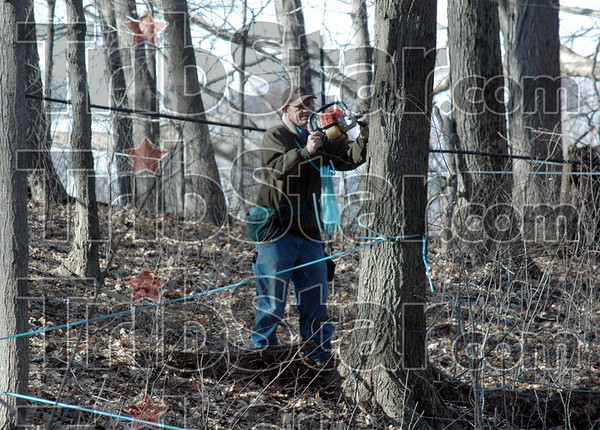 Tapping: Vigo Co. Parks Department employee Mark Kimmell taps a maple tree Friday morning near Prairie Creek Park.