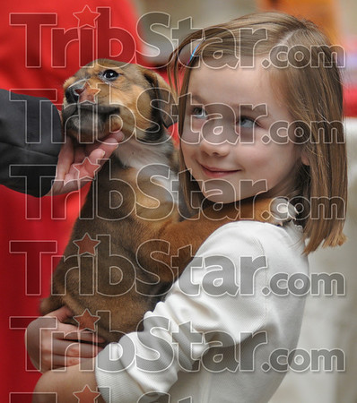 Whatdaya think dad?: Five-year-old Morgan Murray holds a puppy and looks to her father Brian for a sign as they shop at Honey Creek Square Saturday morning.