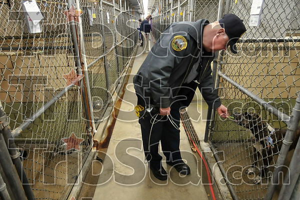 Keeping the peace (or piece): Terre Haute Animal Control Officer Jerry Arney feeds a canine in the Terre Haute Humane Society Wednesday after he dropped off another stray.