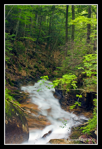 Brooke at The Flume Gorge at Franconia Notch State Park NH
