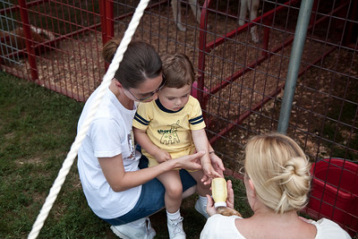 Jack feeds the goats