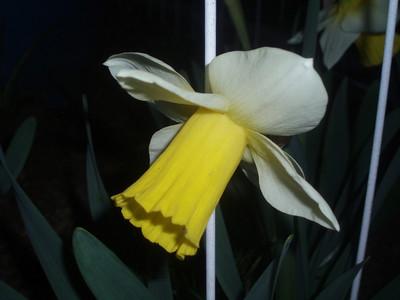 Garden '09