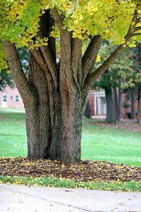 Fall campus shots; 2009