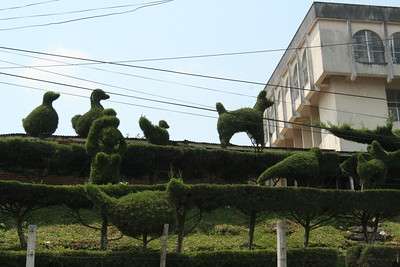 Animals in the bushes
