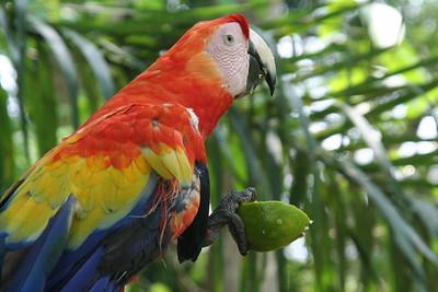 Macaw breakfast