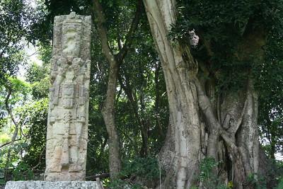 Stone vs. tree: the standing contest