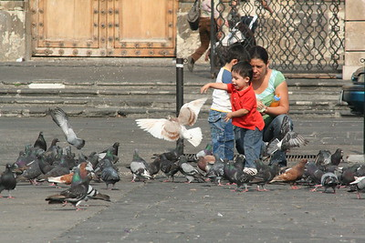 Children chase pigeons in the park