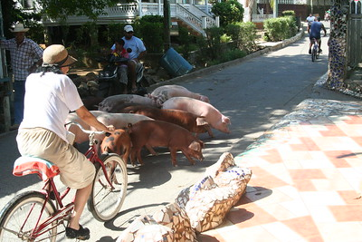 Cowboys ride horses, but pig herders just need a bicycle