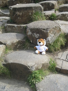 Patrick at the Giant's Causeway - Kimberly Collins