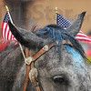 All American horse: Small flags adorn the bridle of one of the horses in Saturday morning's Frontier Day parade.